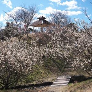南部丘陵公園の梅