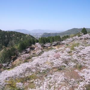 蘭丸ふる里の森 桜