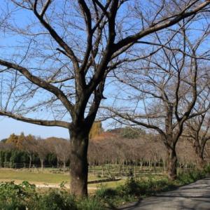 裸木の並木