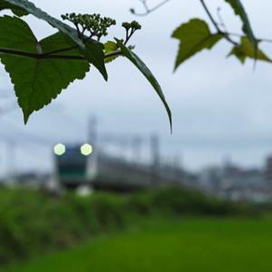 緑色の風景