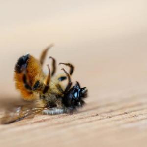 お盆明けまして蜂蜜の配送ほぼ終了!