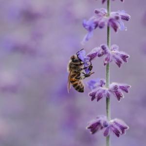 『蜂蜜講座 ハニーセラピスト・オンライン』