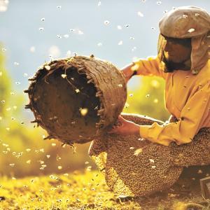 HONEYLAND  −『半分分けていただく恵の蜂蜜』