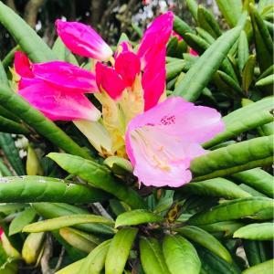 朝の散歩で見た花  2020.03.29