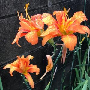 朝の買い物で観た花 2020.07.14