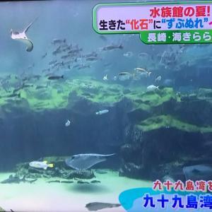 九十九島水族館の夏 2020.08.05