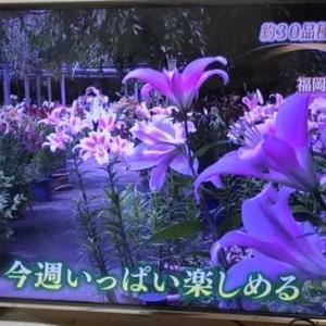 福岡東区筥崎宮 約30品種5000本ユリが見ごろ 2021.06.24