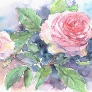 麗しいピンクの薔薇