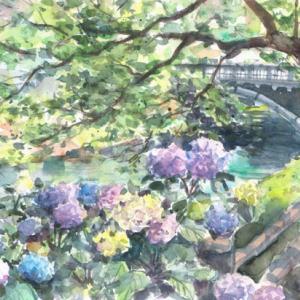 松川べりの紫陽花