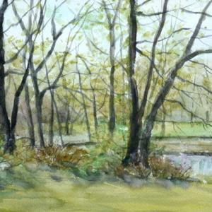 早春の雑木林