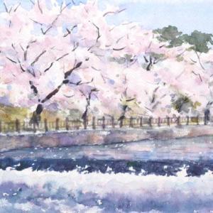 流水と桜並木