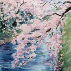 松川べりの桜