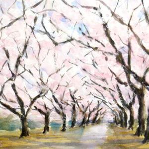 植物園の桜並木
