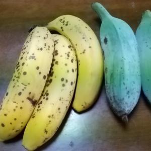 22日バナナ日記