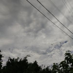 6月20日(月)晴れ