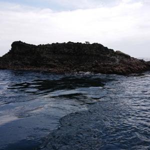 流速激しい潮の中で。妻良沖磯