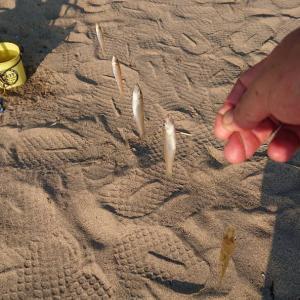 あの日、あのとき。No.62【砂浜に踊るパールピンク 氷見海岸】