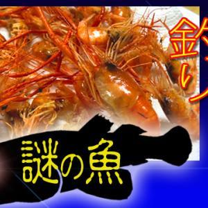 テナガエビを食べようと思ったら謎の魚が釣れちゃった!!