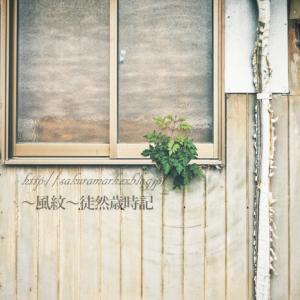 家壁に繁茂するもの。