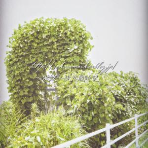 緑のオブジェ。