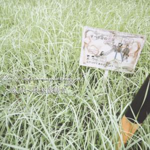 夏草のガーデン。