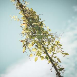 繁茂する蔦。