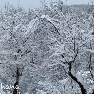 雪で真っ白