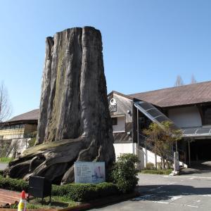 大木、こんな大木見たことねー