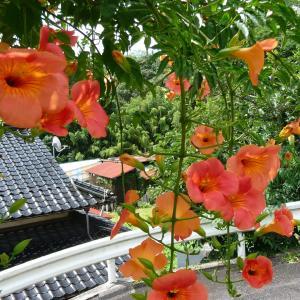 梅雨に花を楽しむ