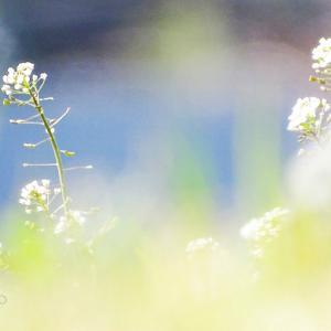 早春☆水辺の公園