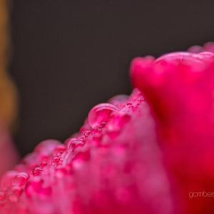 花片しずく 1