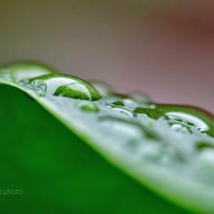 雨の日のスナップ