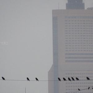 椋鳥一直線