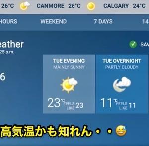 『バンフの気温+26℃って今年の最高気温かも?』『夏の様子のバンフです』『昼には蚊も多い』『ワンコの成長速度の早さ』Banff,Canada