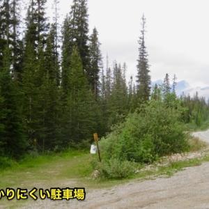 『初のヘクター・レイク(Hector Lake)へのシニアーハイキング①』『距離も短く標高差も少ないので楽なハイキング』『途中の道は泥道&木々の根っこも多く歩きにくい』『苔もあり花々も多い』Banff,Canada