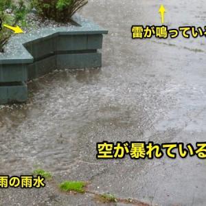 『空が暴れていた昨日朝の雷・雹・雷雨』『今日はその雨の為かボウ川の水量増加』『川岸まで目一杯の泥水』『黄色のタンポポ花盛り』記事書きはBanff,Canada