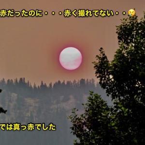 『真っ赤に燃えるぅ〜太陽だから〜〜♬🎶 なんて歌ってる場合じゃないのに』『朝は真っ赤な太陽』『川面の空もピンク色』『焦げ臭い匂いが家の中まで侵入』*記事書きはBanff,Canada