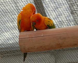 神戸花鳥園へ【その8】オレンジの妖精コガネメキシコインコ