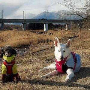 冬寒のお散歩
