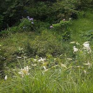 家の周りの野の花々