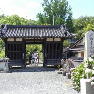 Mayの街の紫陽花寺