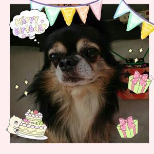 ハミルくん。犬生最高に最悪な誕生日。