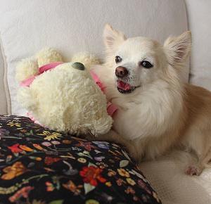 Fluffyでcuddlyが好き