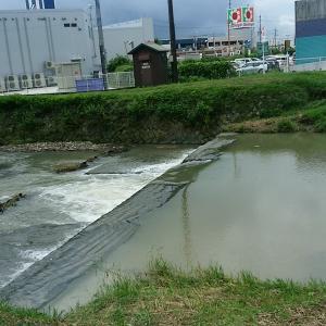 朝の琵琶湖真野川!!