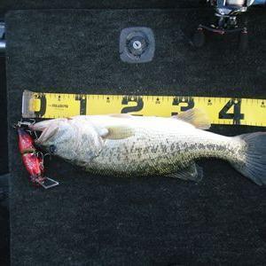 振り返る琵琶湖バス釣り 朝練 トップで57センチ・沖で55・48ゲット!!