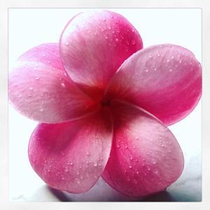ウチに咲くお花シリーズ