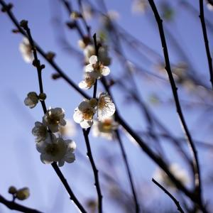 花粉舞う花見。