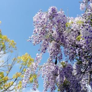 4/30~5/3、神戸は平穏無事でした。
