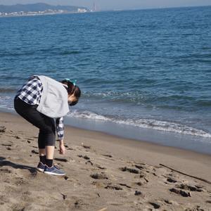 三浦海岸/初冬の貝殻広い