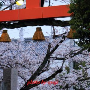 立木神社の桜2020